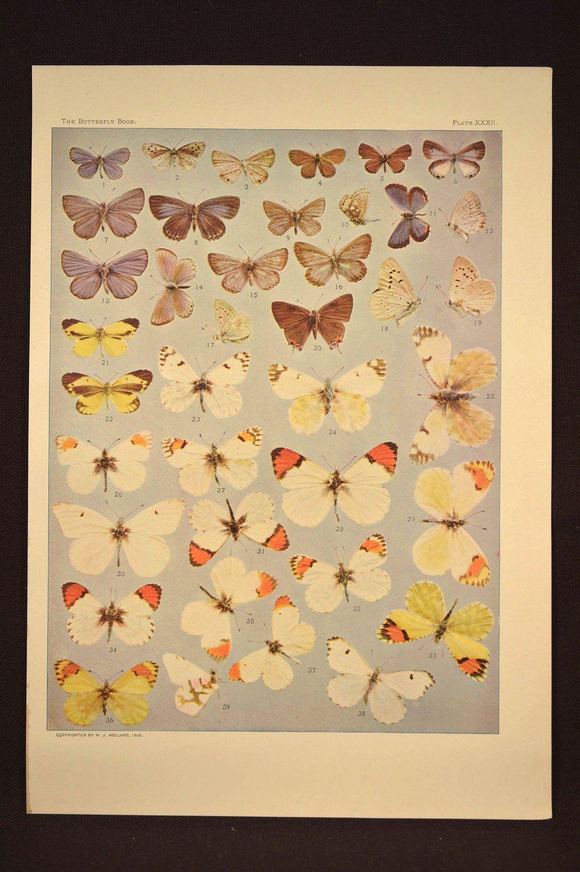 Butterfly Wall Art Butterfly Print Butterflies Antique | Nature ...
