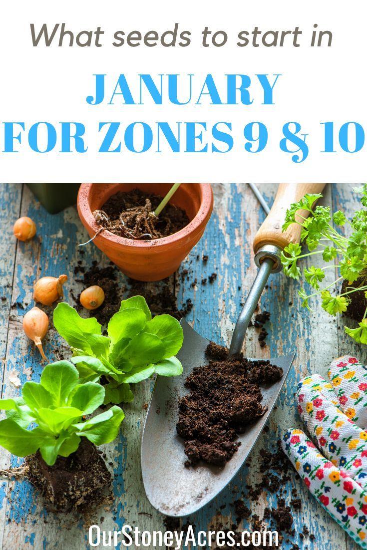 18 planting Garden food ideas