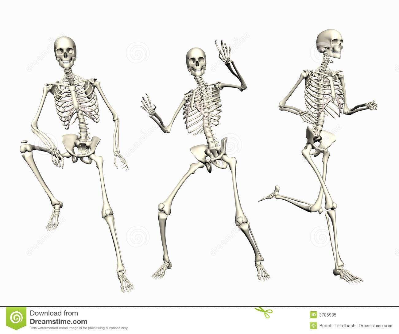 Pin de geusilaine em Anatomia em 2019