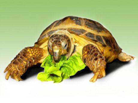 TortoiseSalad