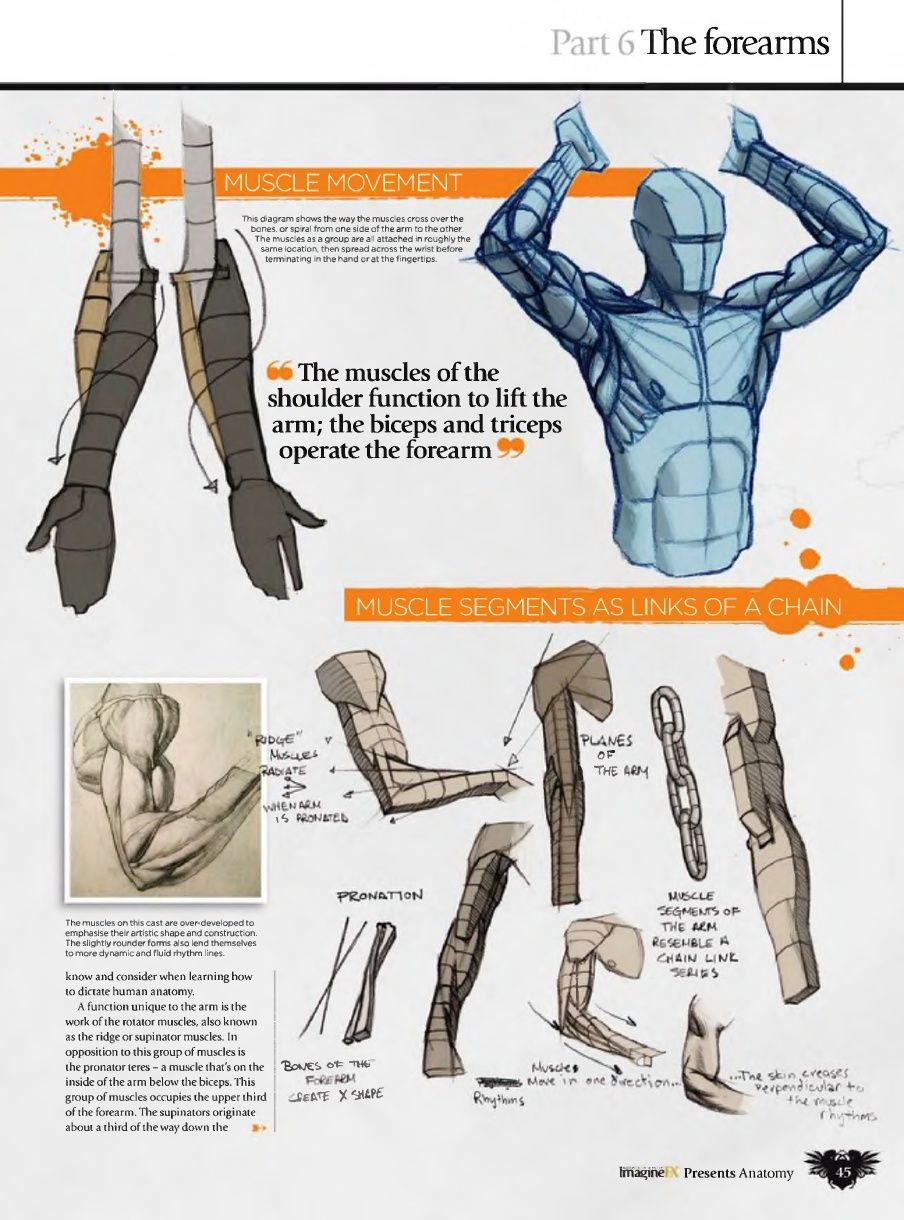 Ron Lemen Arm Anatomy! | Arms | Pinterest | Anatomy, Arms and Drawings