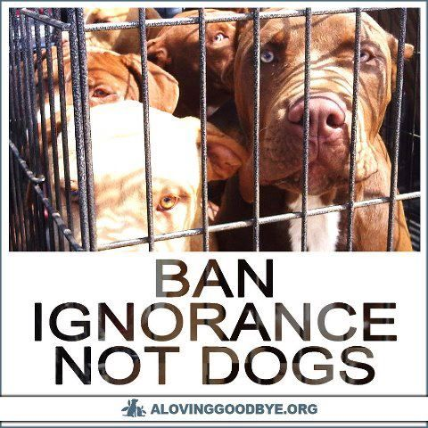 NO BSL (breed specific legislation) It's not bad dogs....IT'S BAD OWNERS!!!