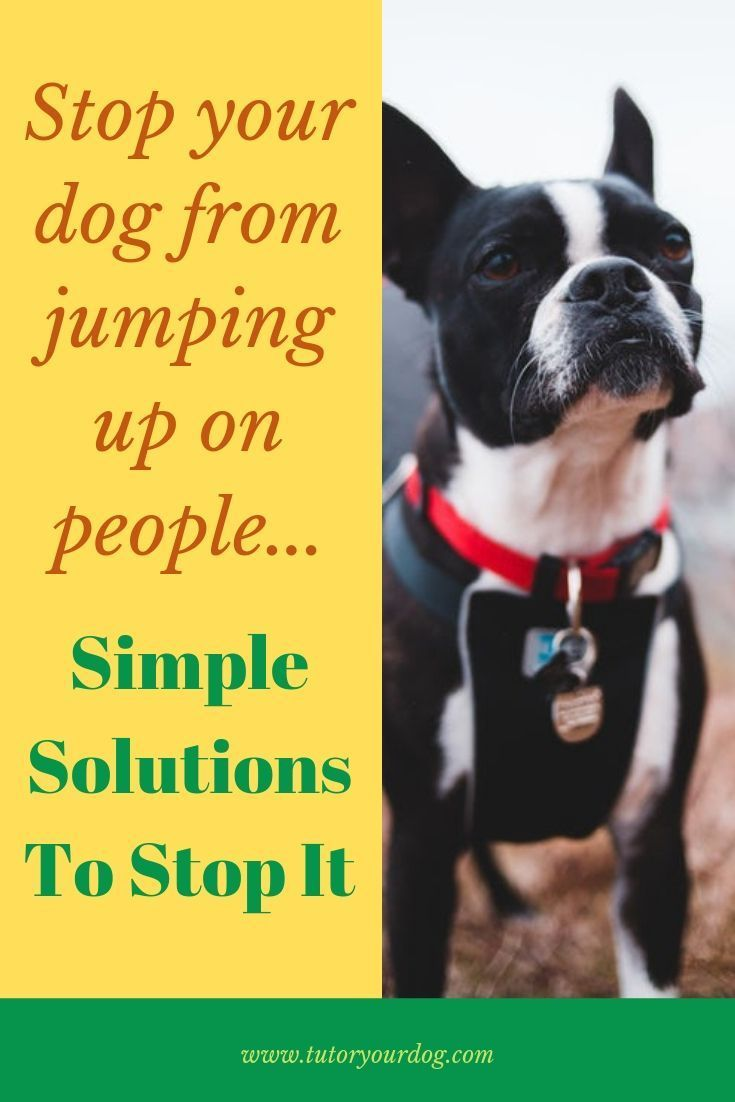 7 simple tips to stop your dog from jumping up on people
