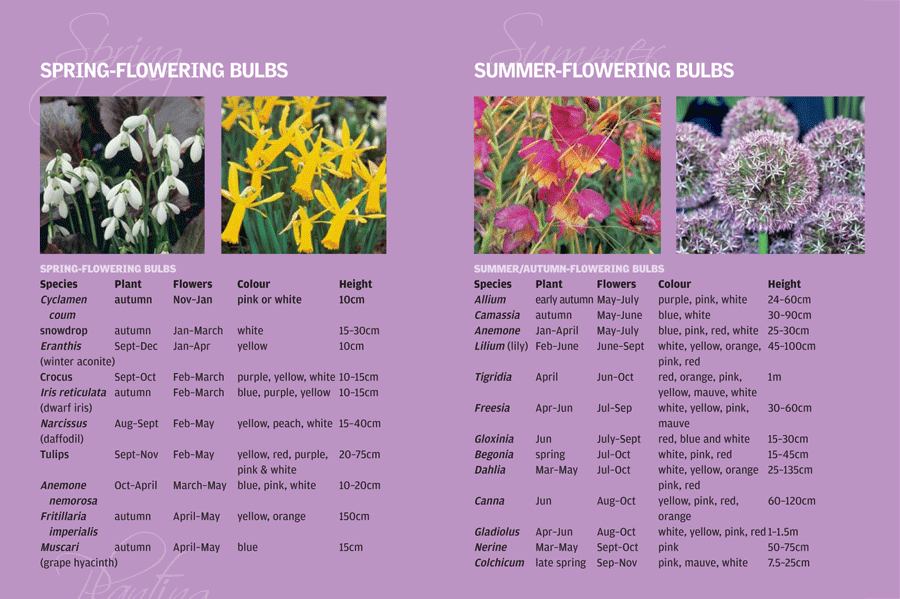 When To Plant Summer Bulbs