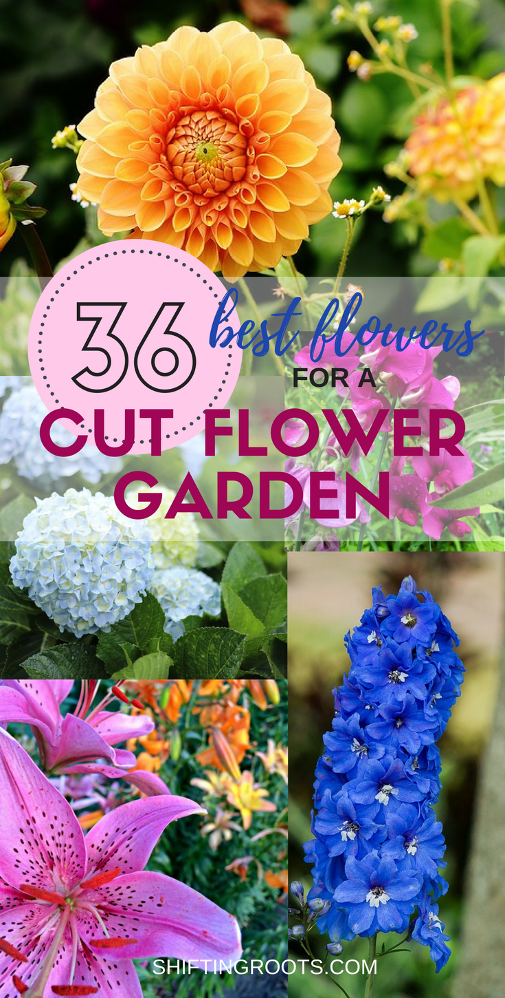 The 36 best cut flowers to feed your floral arranging habit all would you like to grow a flower garden full of fresh cut flowers me too ive compiled a list of the best perennials and annuals for beginners mightylinksfo