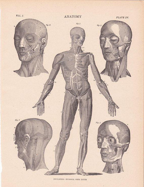 This Antique Anatomy Print Came Out Of A 1904 Encyclopedia It