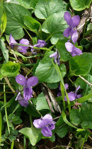 Febbraio cosa piantare e raccogliere nel giardino-orto e campo - NOTIZIE IN VETRINA