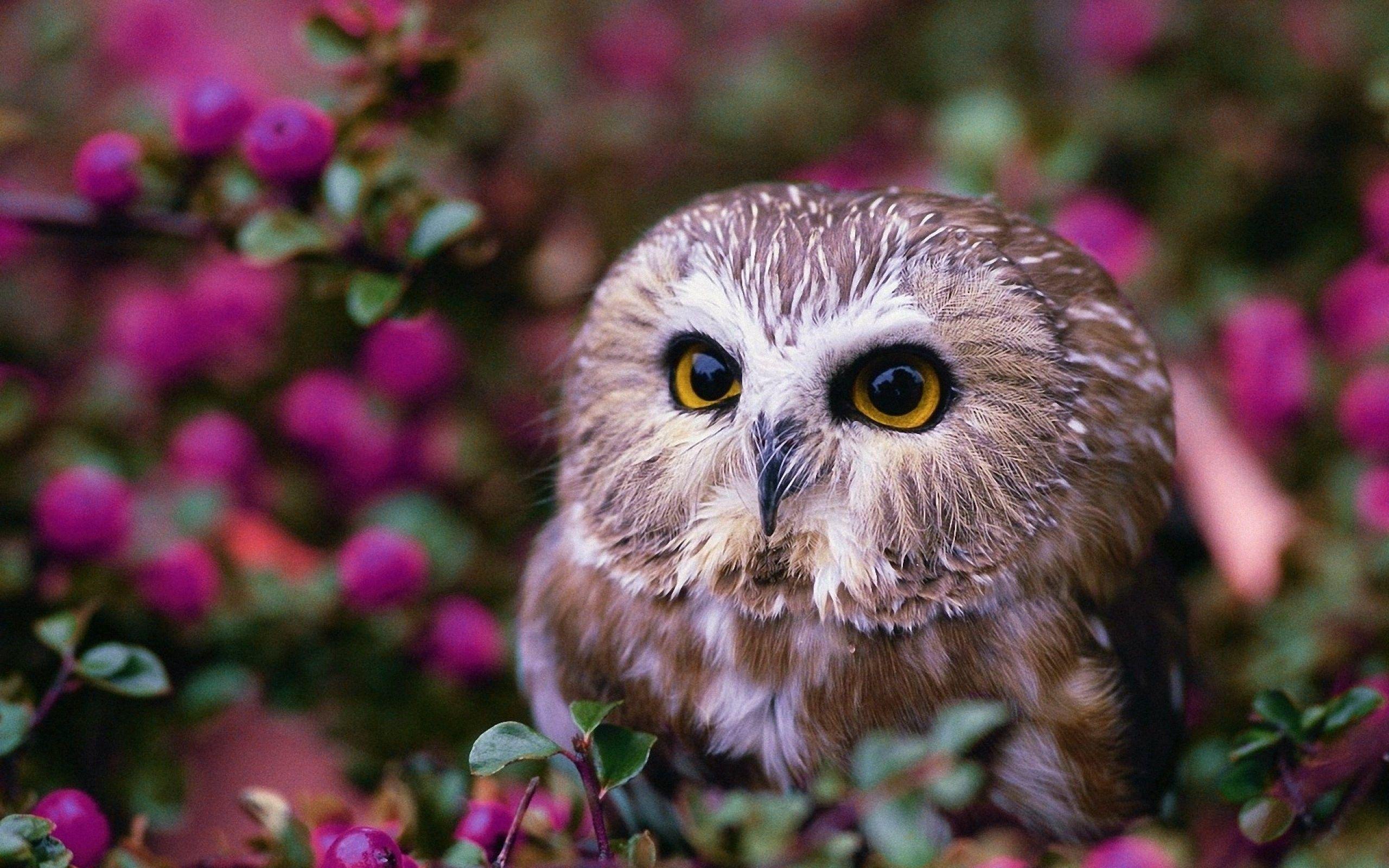 Картинки красивые совы (35 фото) (с изображениями) | Обои ...