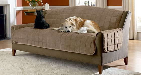 Cool Couch Protector For Dogs , Awesome Couch Protector For Dogs 43 About  Remodel Living Room
