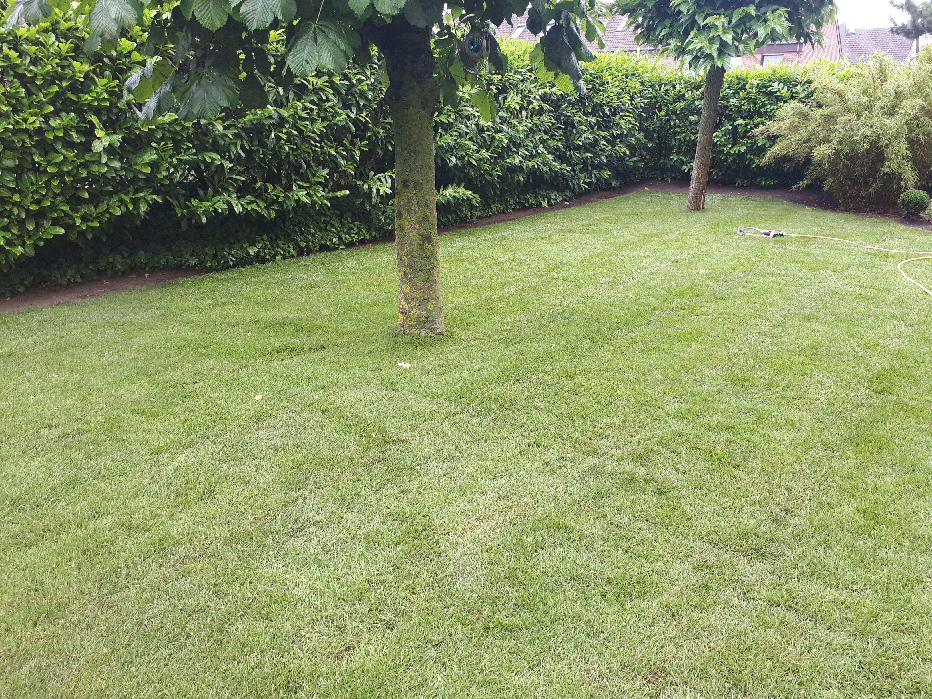 Rollrasen Verlegen In Hannover Und Region Rasen Gartengestaltung Garten