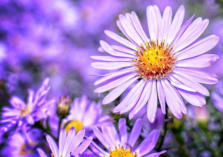 Why Are Native Plants So Important For Your Garden Native Plants Plants Growing Flowers