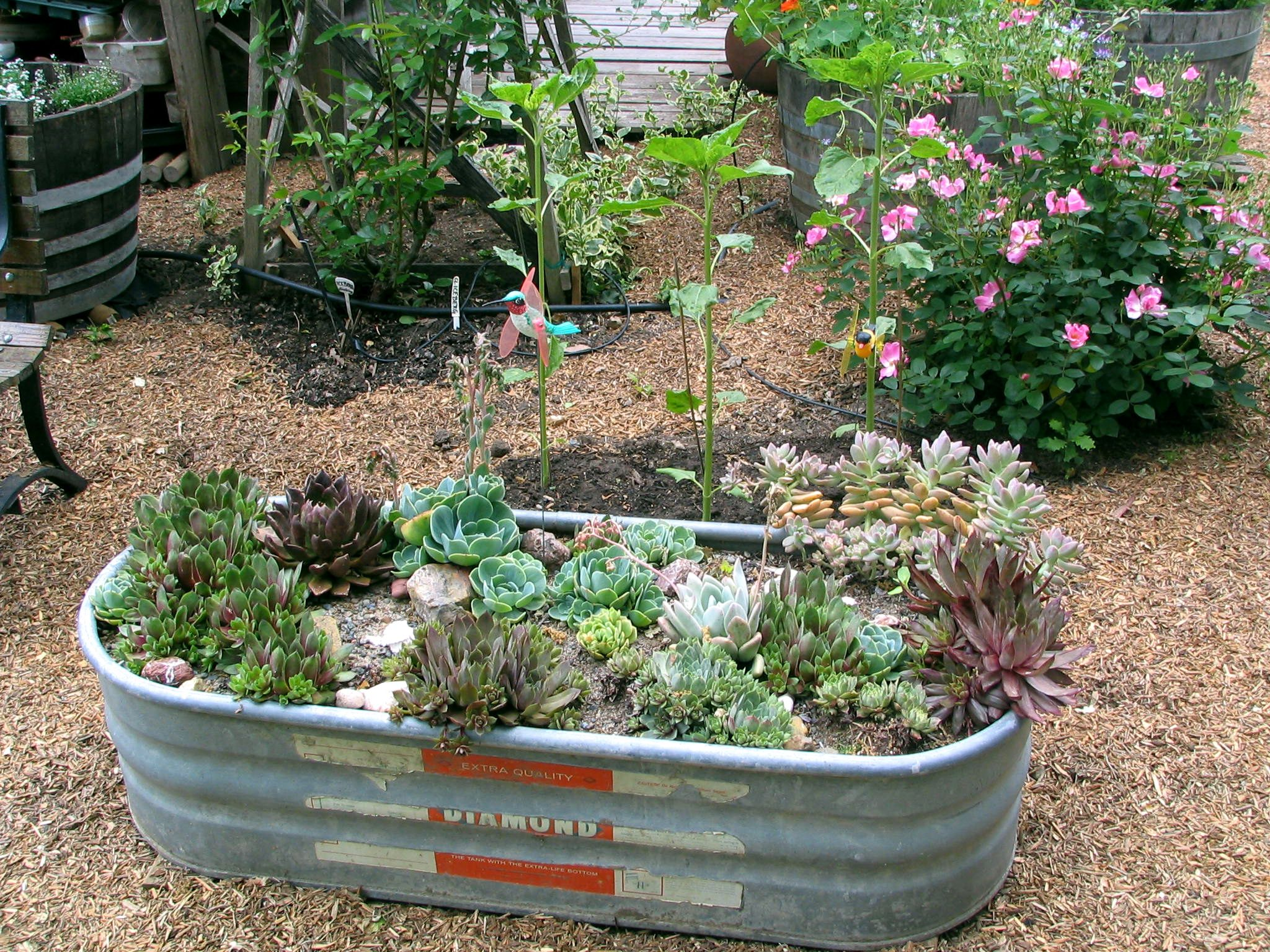 Horse trough succulent garden Crafty Garden Treasures