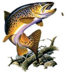 Pecheur de truite fario tableau trout tattoo fish - Dessin truite ...
