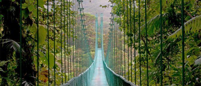 Central American suspension bridge in the rainforest