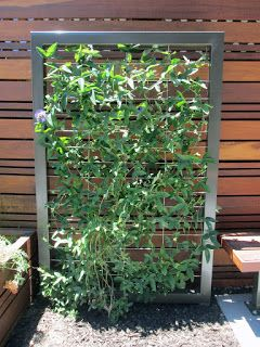 Taproot Garden Design Fine Gardening Wong Residence In Mountain View California Fine Gardening Vine Trellis Garden Design