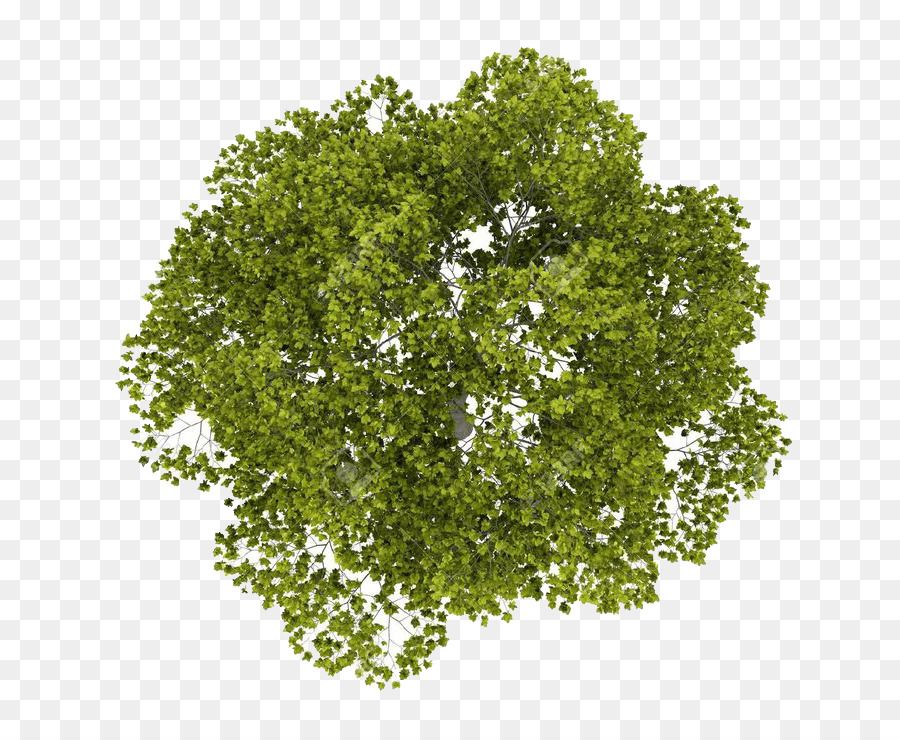 Image Result For Trees Png Plan Tree Plan Photoshop Tree Plan Tree Plan Png