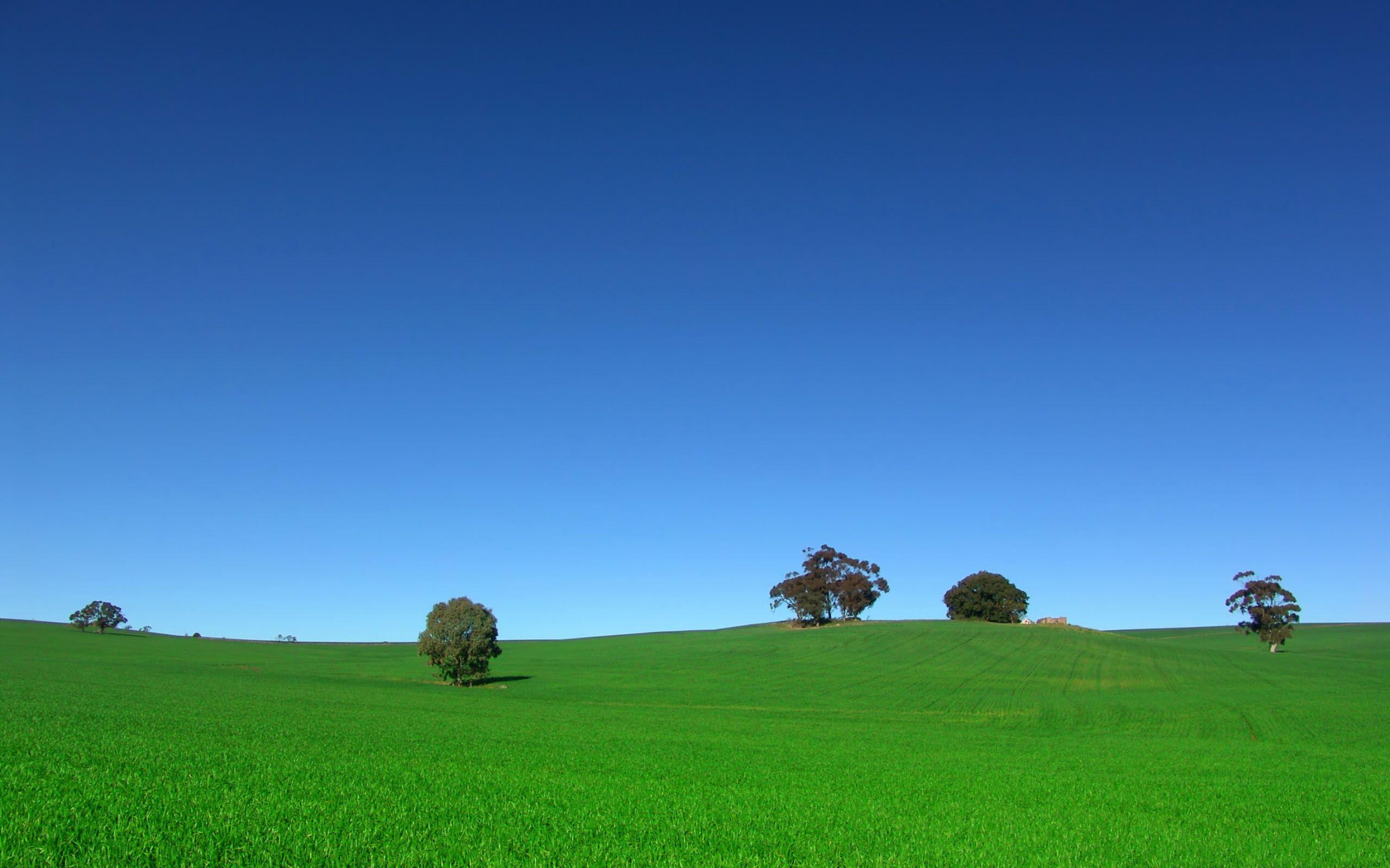 green grass blue sky. view: green grass blue sky r - prashanti.co