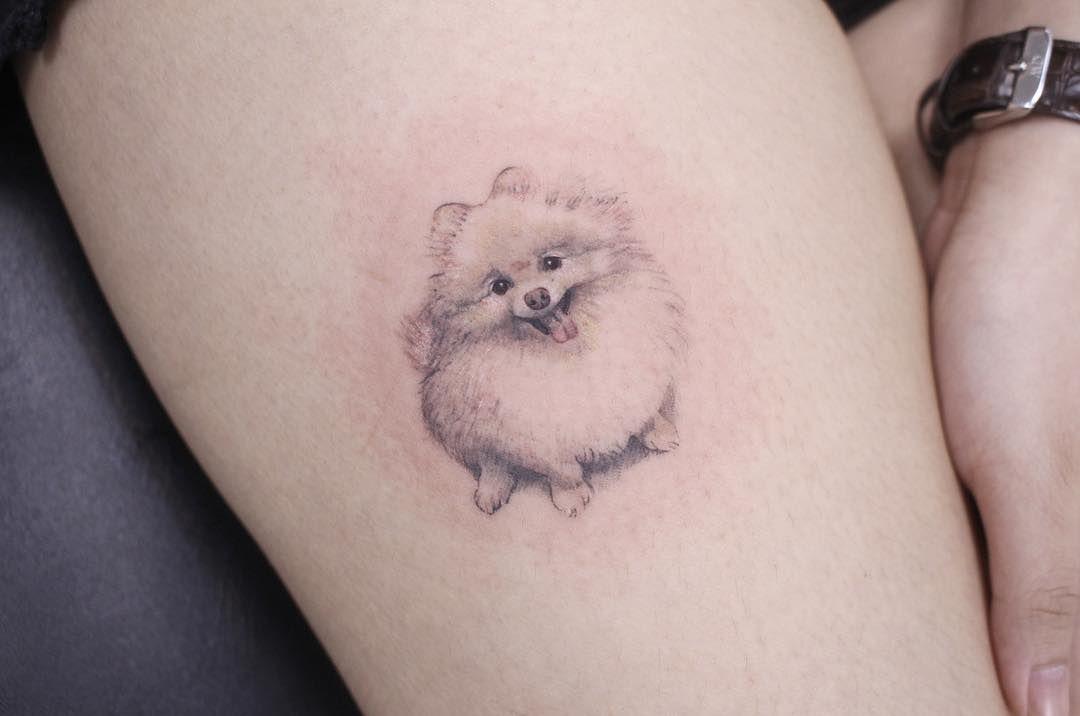 A white Pomeranian doggo </p>  </div><!-- .entry-content --> </article><!-- #post-37740 -->   <nav class=