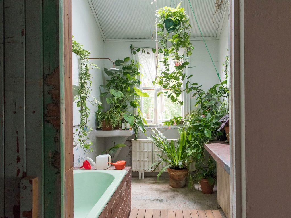 The plants that will actually thrive not die in your bathroom bathroom plants plants and - Houseplants for the bathroom ...