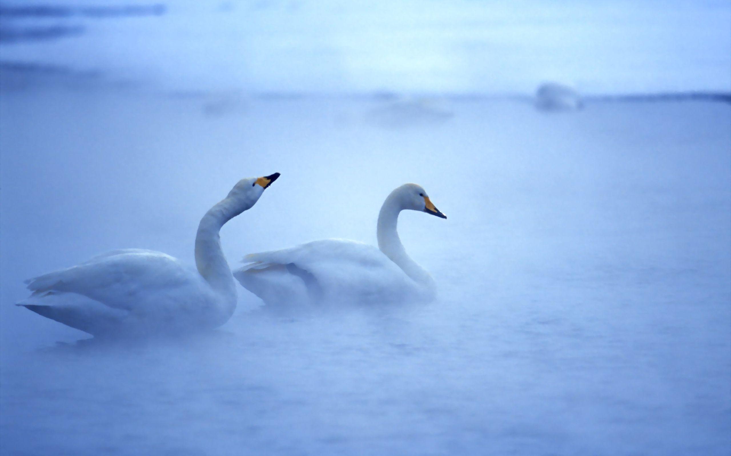Articles/Photos sur les animaux - 2 - Frawsy