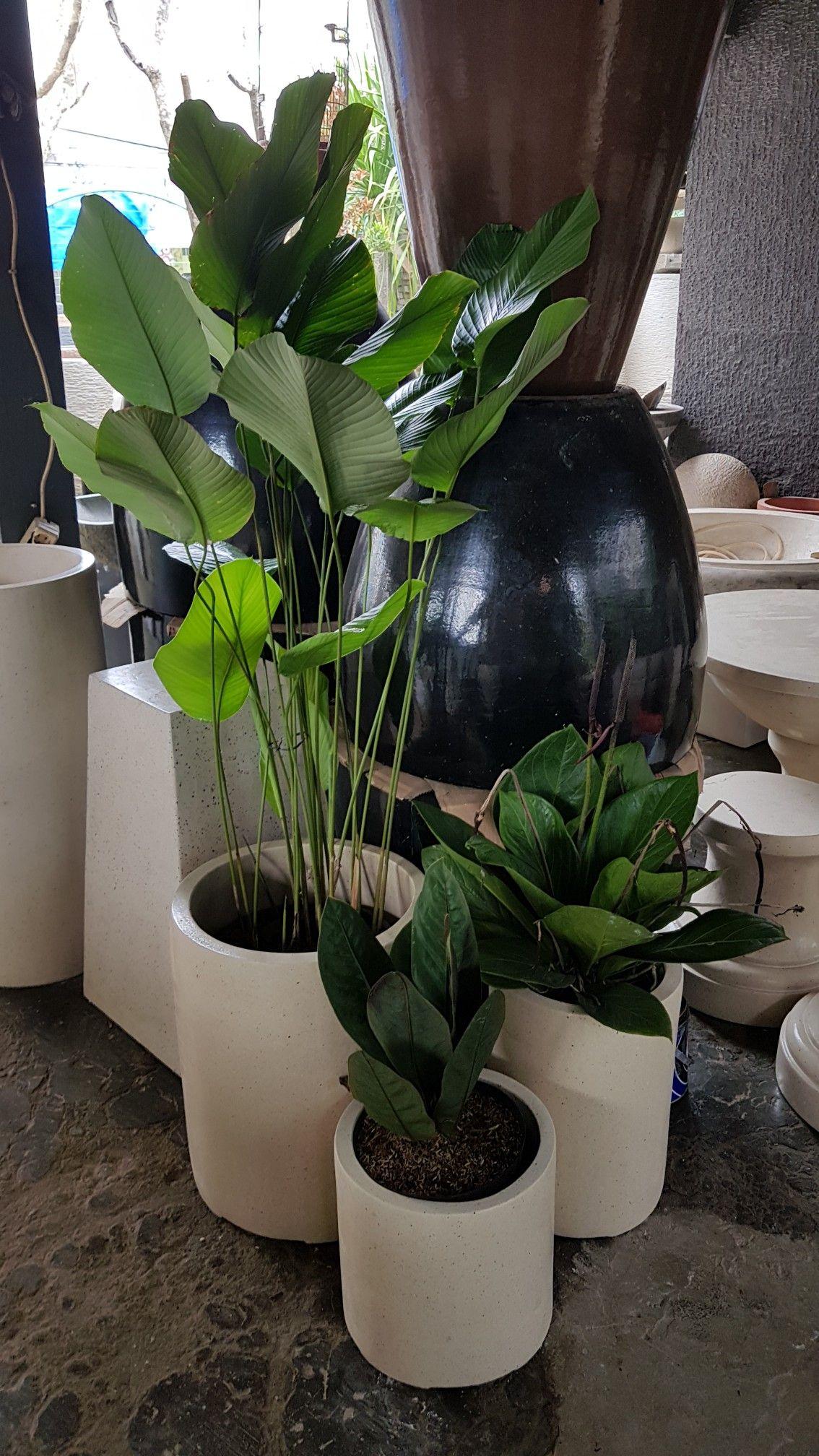 Pin Di Pot Indoor Mewah