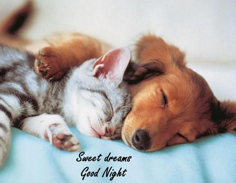 Dogs And Cat Together Saying Goodnight