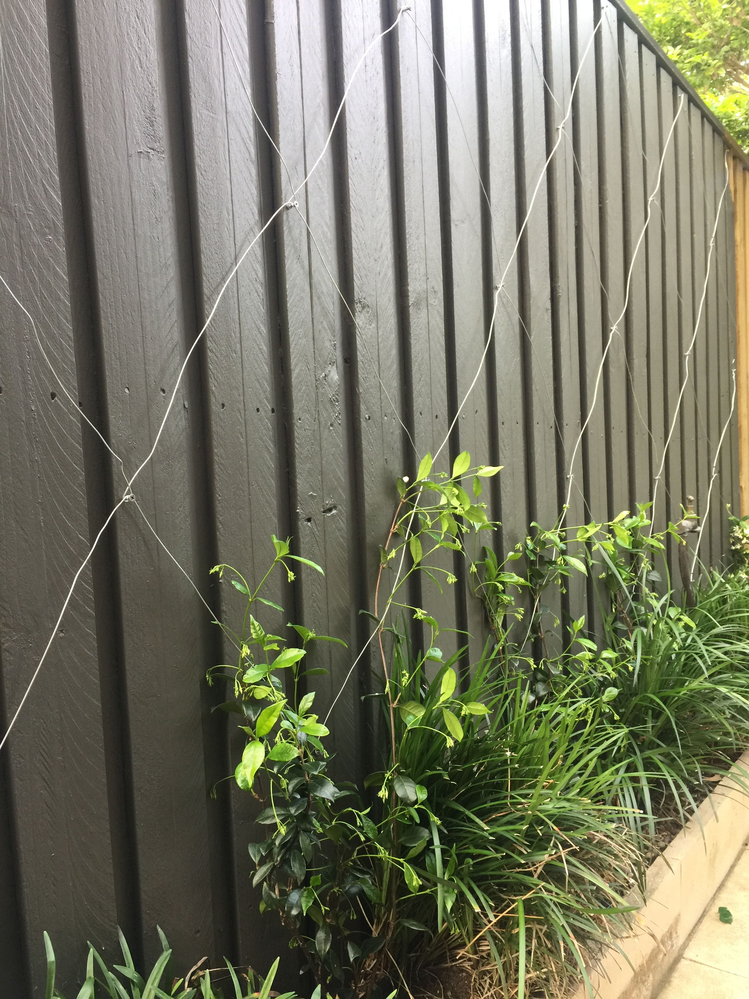 Dulux Woodland Grey Perfect Fence Color Backyard Fences Fence Paint Colours Diy Backyard Fence
