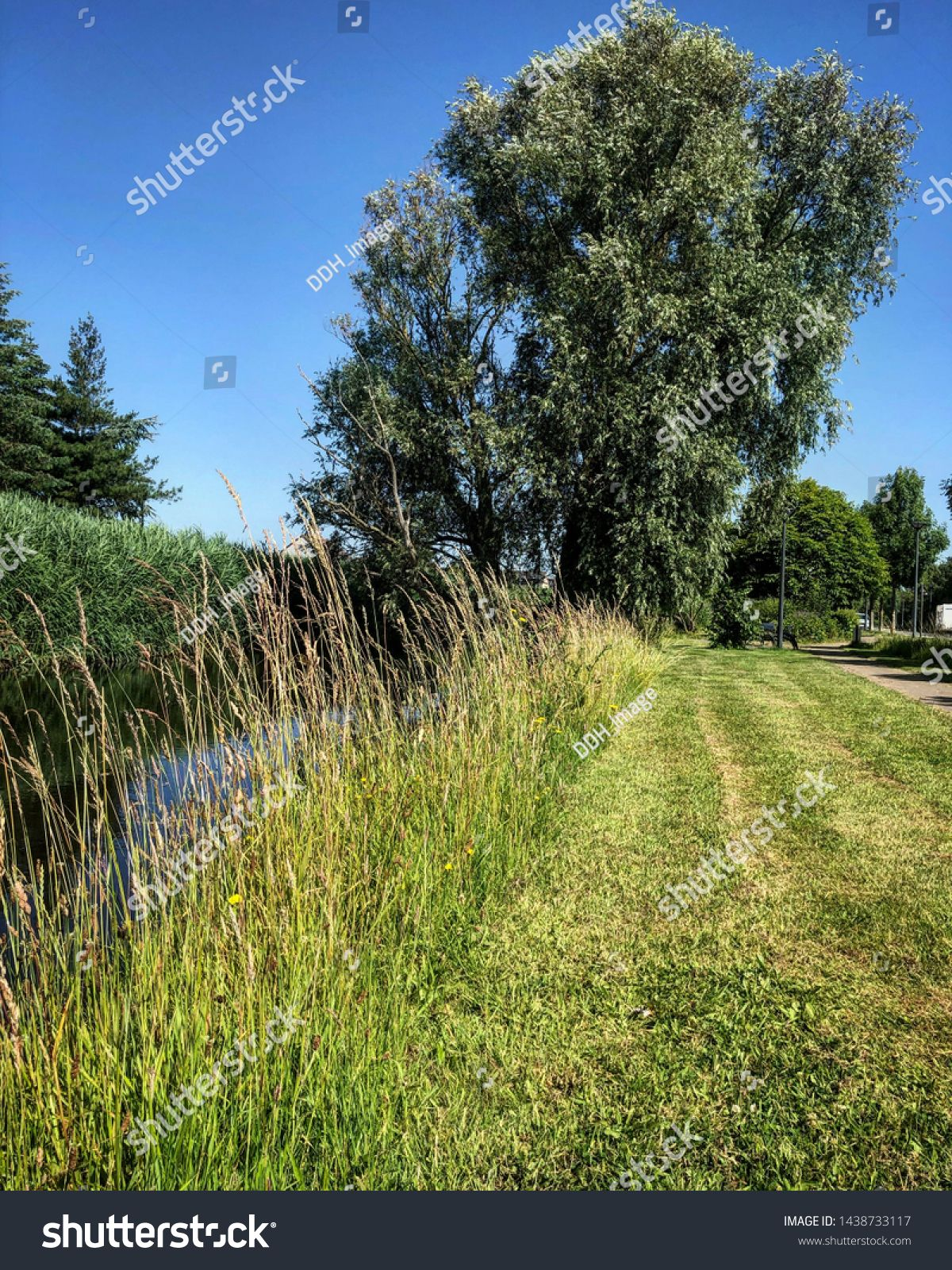 Outdoor Green Park Forest Next To River Rural Landscape Path With Trees And Grass And Modern Benche Sponsored Ad Forest Ri With Images Park Forest Green Park Outdoor