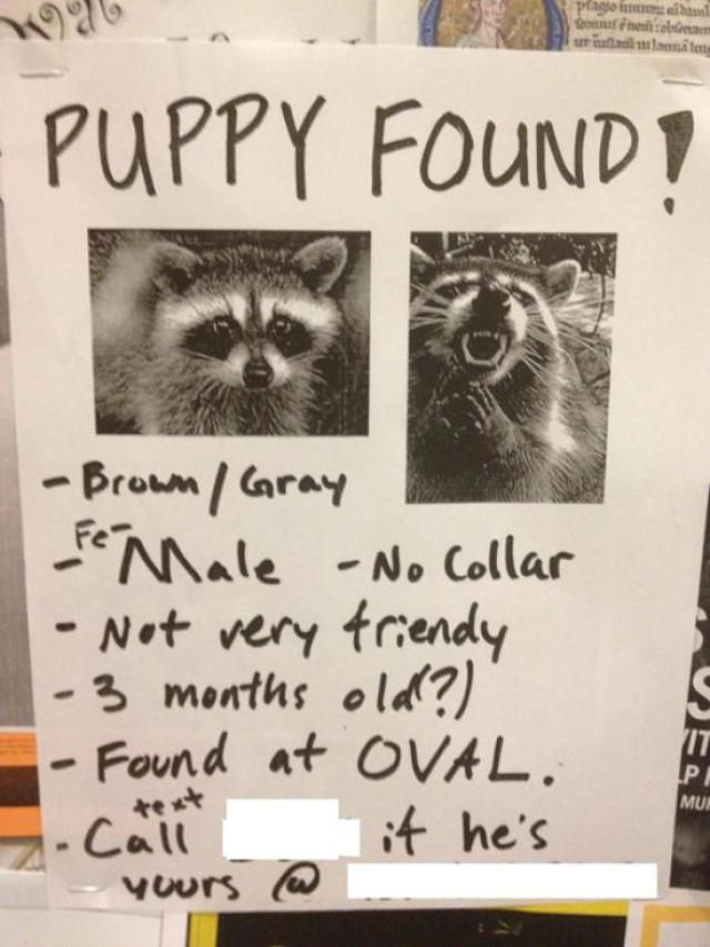 20 funny lost and found pet posters funny pics losing
