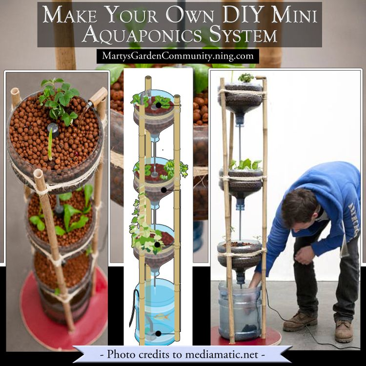 Do It Yourself Home Design: Make Your Own DIY Mini Aquaponics System