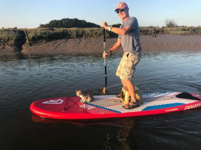 noodle the cat loves going paddle boarding with her 72