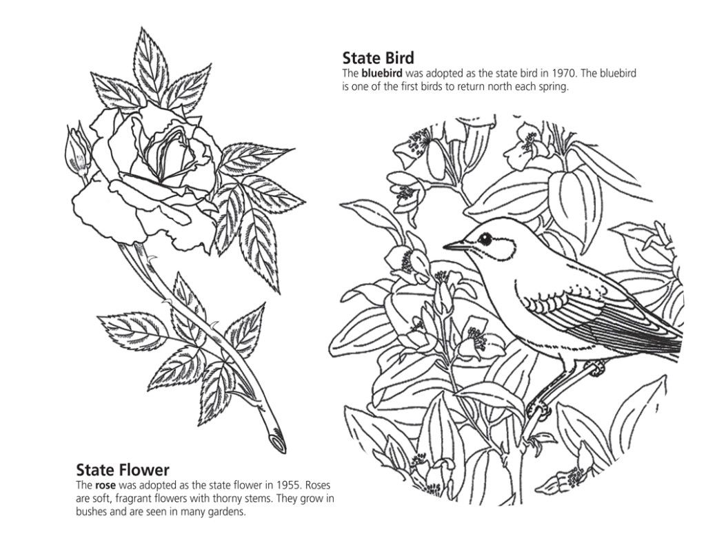 Nys Symbols Coloring Book Printable Individual Pages
