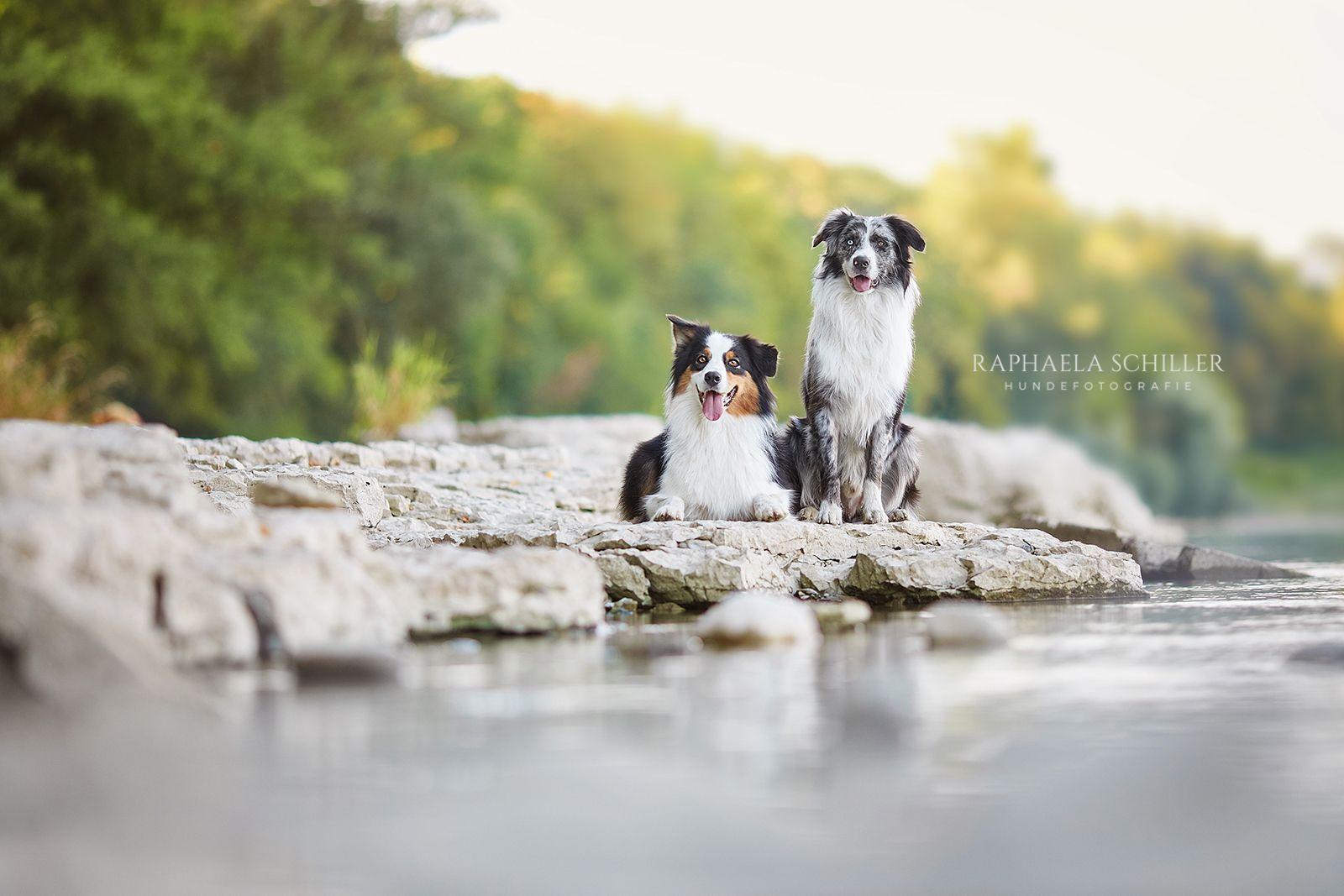 Pin von Ashley101 auf i love dogs (mit Bildern