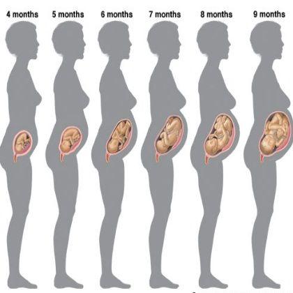 pregnancy month by month maternamdo pregnancy months, pregnancy 6 Month Fetus
