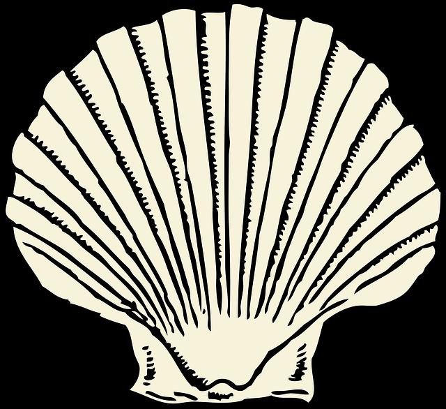 Free Image On Pixabay Scallop Clam Shell Seashell Seashell Clipart Art Shell Drawing