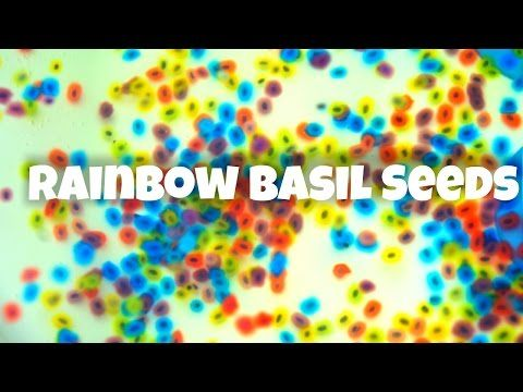 How to Make Rainbow Basil Seed Water Beads - natural Orbeez - YouTube