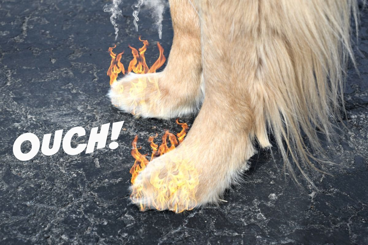 Protecting Your Dog S Paws From Extreme Heat Dog Paw Care Dog Paw Wax Dog Paws
