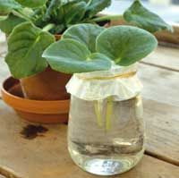 Propagating Houseplants  (several methods!), growing from seeds, and much, much, more-JE