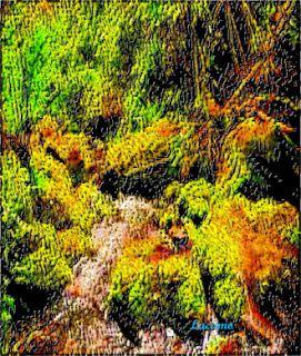Lucamo: Creación con palabras e Imágenes: Moss