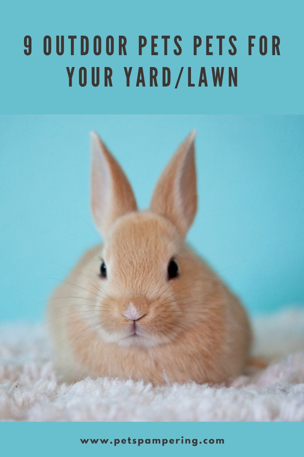 9 Outdoor Pets Pets For Your Yard Lawn In 2020 Animals Pets Rabbit Bedding