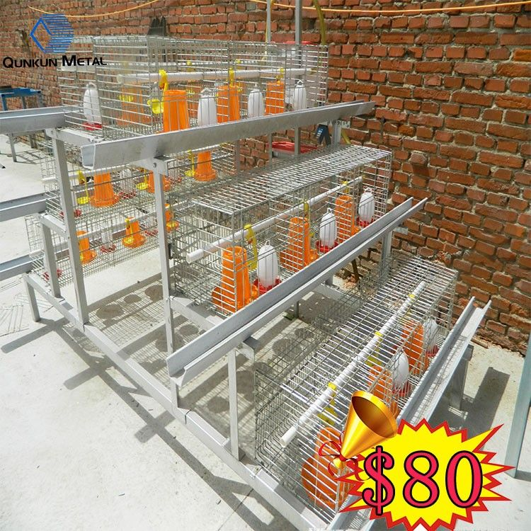 Chicken Poultry Shed Poultry Farm Design Layer Broiler