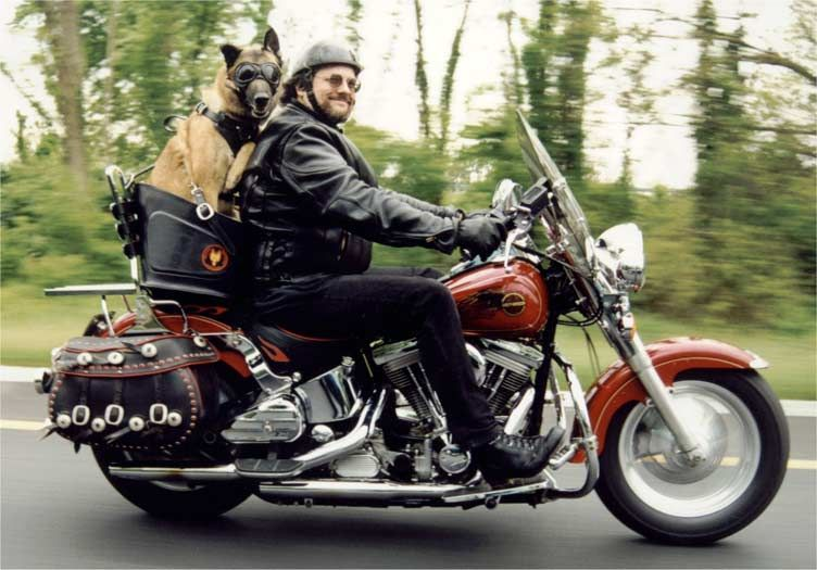 Pictures Of The Road Dog Motorcycle