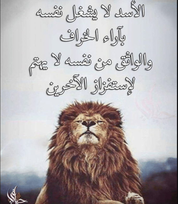 عبارات عن اعداء النجاح Favorite Book Quotes Wisdom Quotes Life Words Quotes