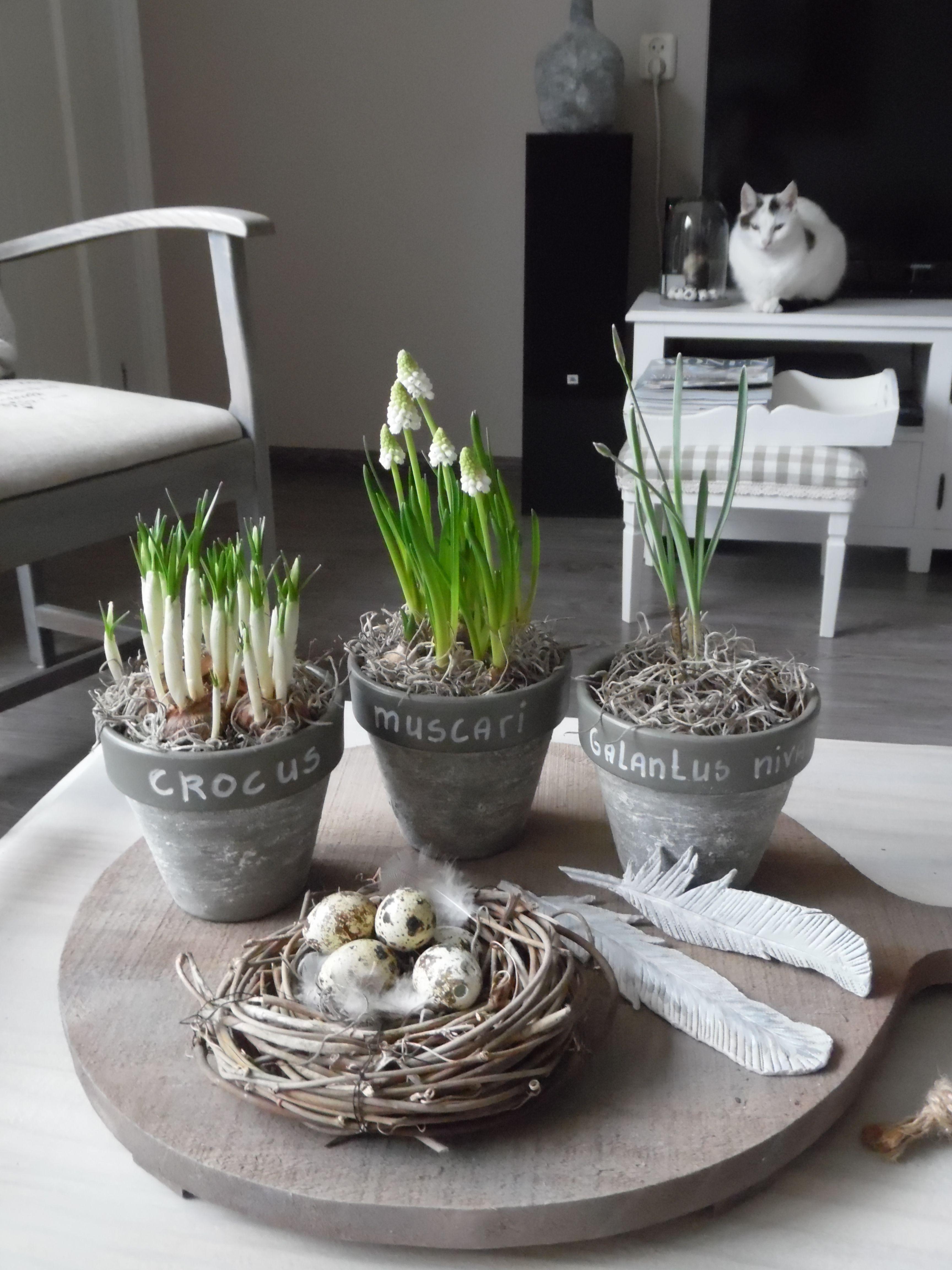 Een Voorjaarstafereeltje Met Voorjaarsbollen Een Nestje Met Eitejs En Zelfgemaakte Veren Van Klei Paasideeen Paasdecoratie Decoraties