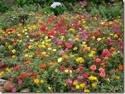 onze-horas,estou plantando.....quero um jardim como este...