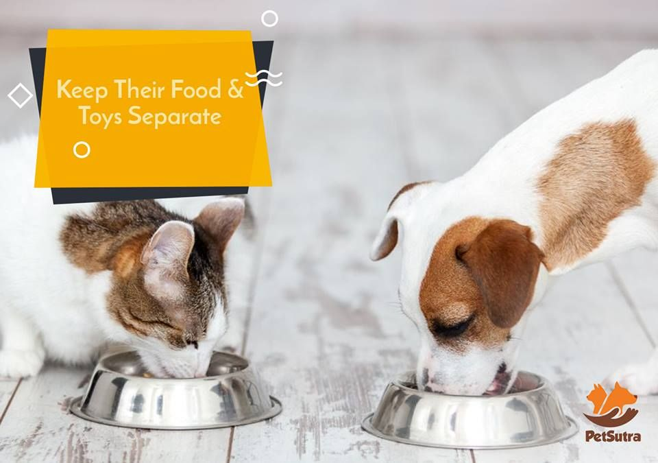 Pin by petsutra on pet parents pets food parenting