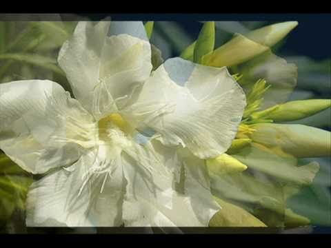 Thomas Newman White Oleander 2002 Soundtrack Suite Youtube