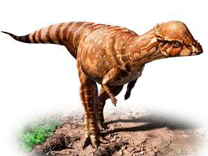 paquicefalosaurio - Buscar con Google