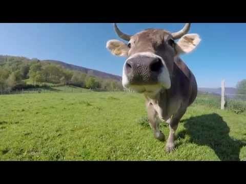 Turismo Rural, disfruta de Asturias | videos desde otro punto de vista