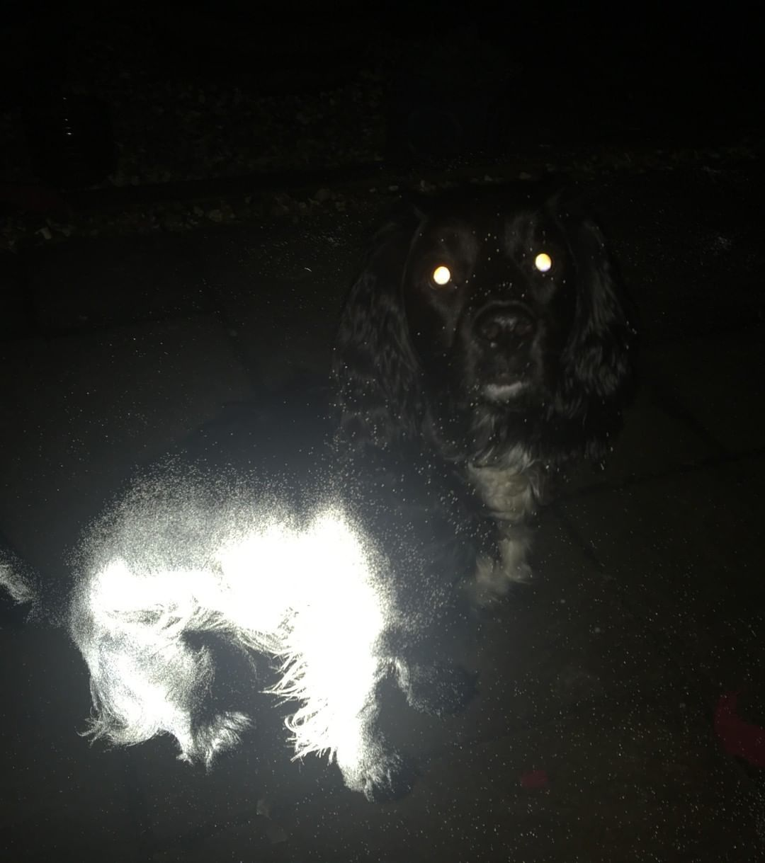 Ensuring that your pet is visible in the dark is vital to